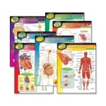 TEP38913-body-learning-chart